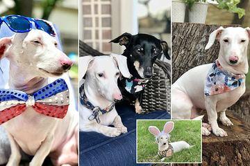 Chú chó trắng cực hiếm 'nổi tiếng' trên mạng xã hội