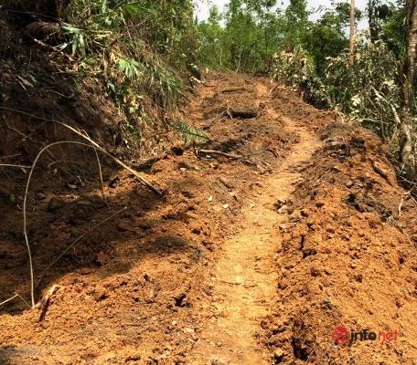 18 cây bằng lăng cổ thụ bị đào tung gốc