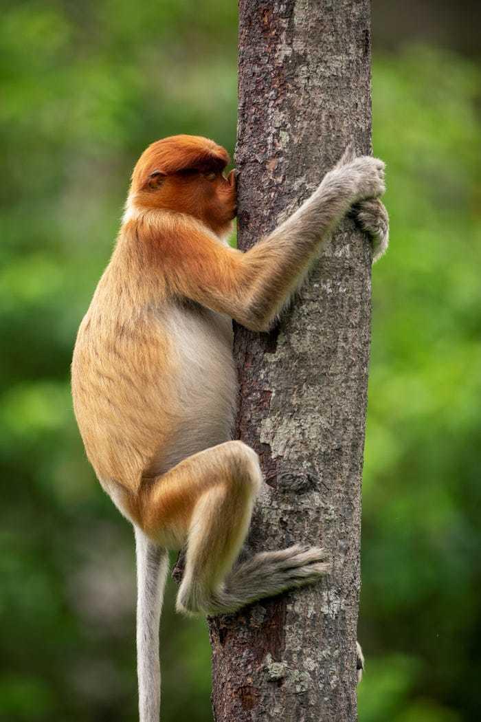 Khoảnh khắc hài hước của động vật hoang dã trong tự nhiên