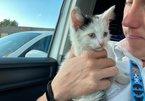 Mèo sống sót thần kỳ sau khi bị kẹt trong động cơ ô tô suốt quãng đường 370 km