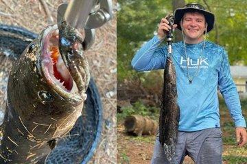 Câu được cá có răng nanh, cần thủ Mỹ bối rối