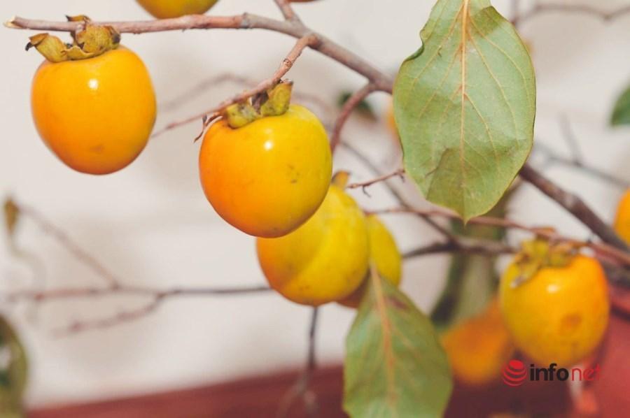Chị em Hà thành lùng mua cành hồng trĩu quả cắm chơi dịp Trung thu