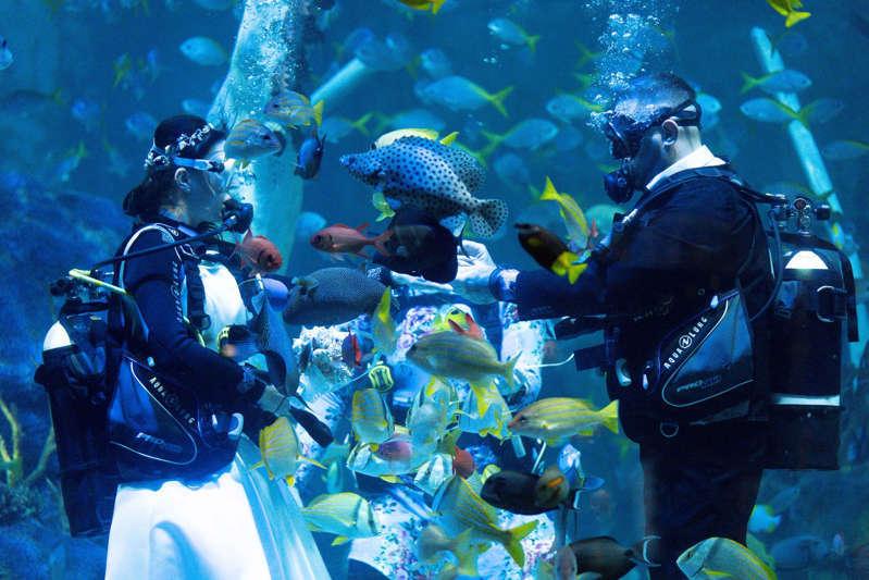 Đám cưới dưới nước xung quanh là những con cá mập