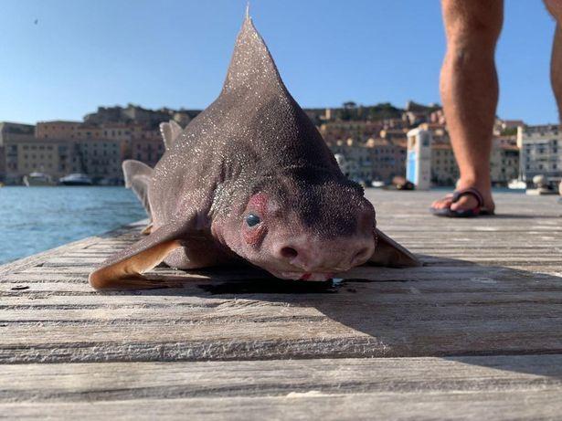 Thuỷ thủ sốc khi phát hiện cá lạ, thân cá mập mặt con heo