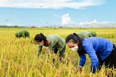 Công an Hà Tĩnh giúp dân gấp rút gặt lúa chạy bão