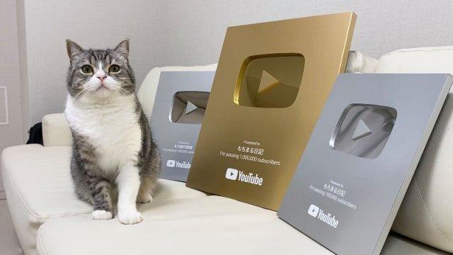 Chú mèo Nhật Bản lập kỷ lục 'đạt nút vàng' Youtube