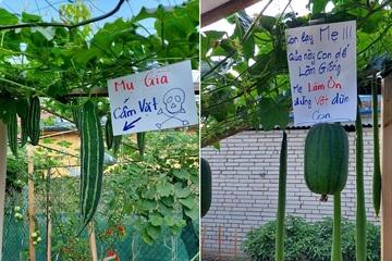 Chết cười với những tấm biển chống trộm của anh chủ vườn rau 'cục xúc'