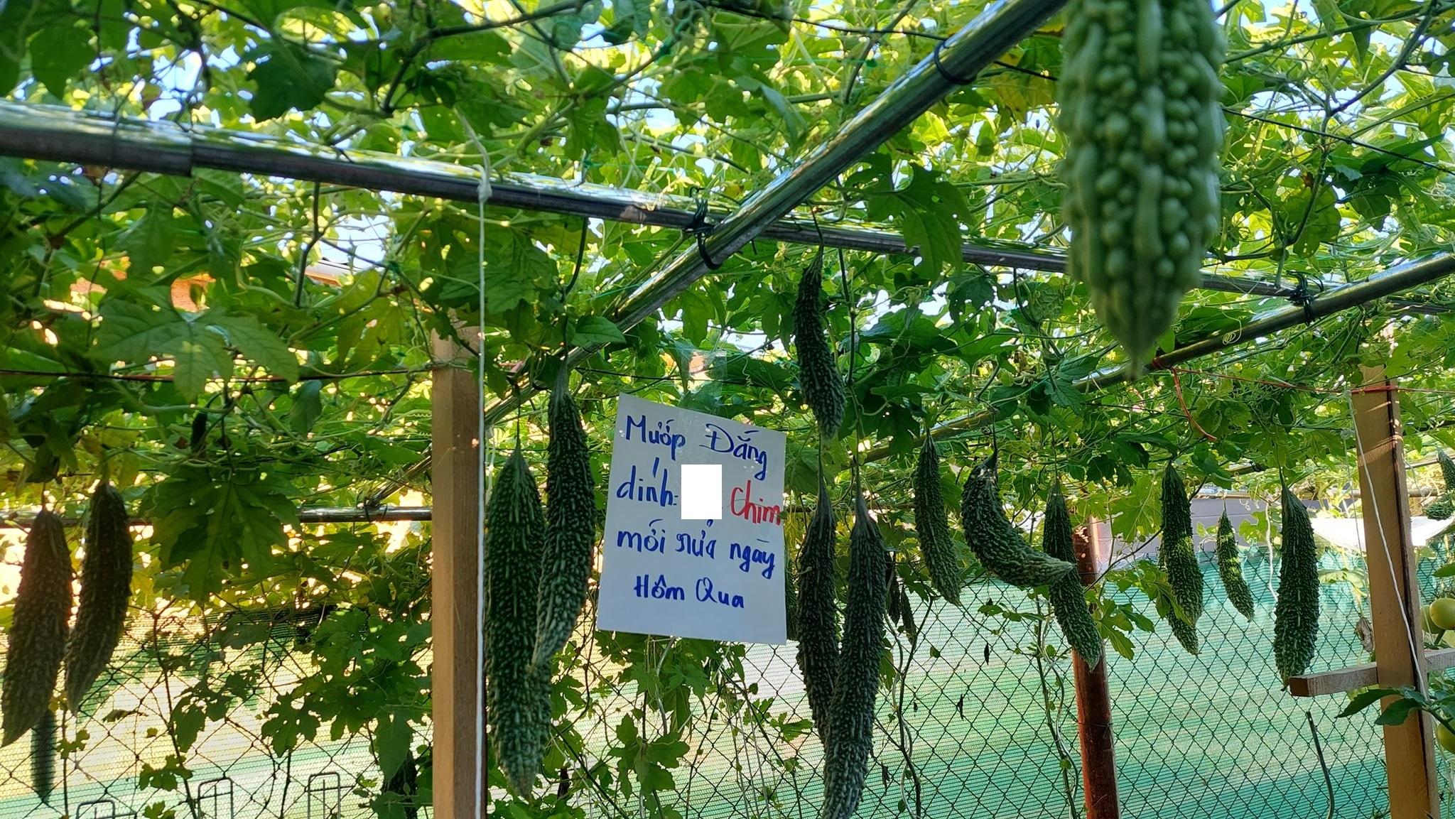 vườn rau,biển quảng cáo