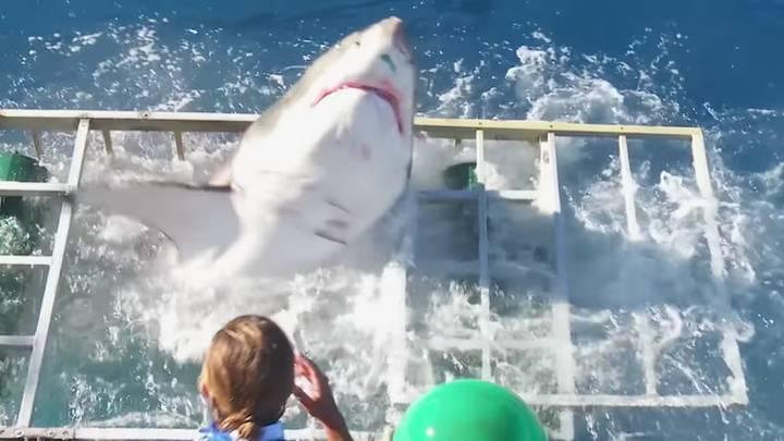 Khoảnh khắc thót tim khi cá mập lao qua lồng có thợ lặn ở bên trong