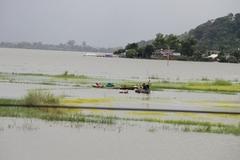 Đắk Lắk: Mưa lớn ngập 300ha lúa chưa kịp chín, dân mượn thuyền chở lúa về nhà 'chạy lũ'
