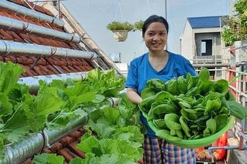 Vườn rau sạch của cô giáo Thái Bình ngay trên mái nhà khiến dân mạng thích mê