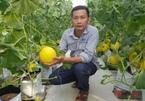Thầy giáo khởi nghiệp trồng dưa lưới, lãi hơn trăm triệu đồng/năm