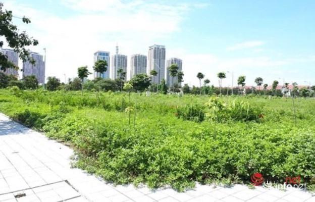 đầu tư đất nền,thị trường đất nền,đầu tư bất động sản
