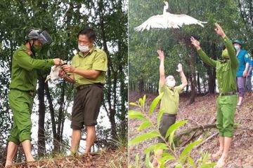 Hà Tĩnh: Thu giữ, tiêu hủy hàng nghìn dụng cụ bẫy chim, bảo vệ môi trường sinh thái