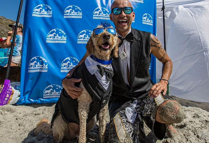 Những chú chó tranh tài tại cuộc thi lướt sóng phiên bản đặc biệt ở Mỹ