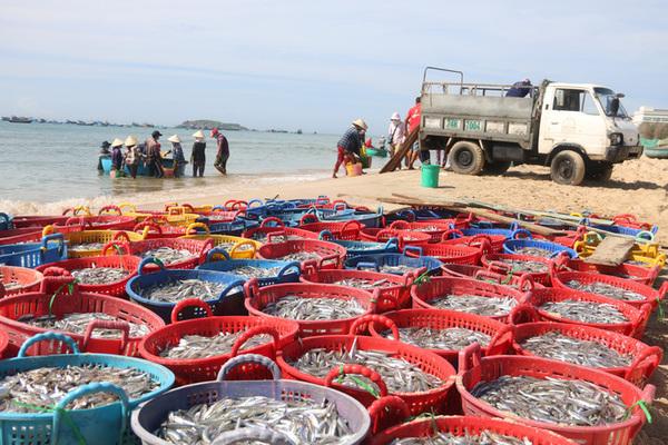Phan Thiết hỗ trợ ngư dân đánh bắt hải sản an toàn trong đại dịch Covid-19