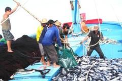 Ngư dân Quảng Nam lo ngại khi sản lượng khai thác thủy sản giảm một nửa