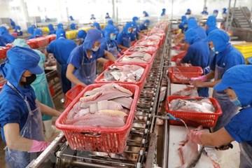 Xuất khẩu thủy sản sang EU sẽ bị tổn thất nếu không gỡ được thẻ vàng IUU