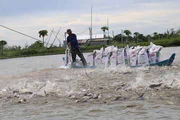 Bến Tre: Tổng sản lượng nuôi trồng thủy sản tháng 8 ước đạt 20.300 tấn