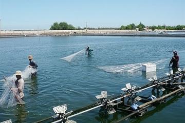 Dự kiến mức thu phí trong lĩnh vực quản lý chất lượng vật tư nuôi trồng thủy sản