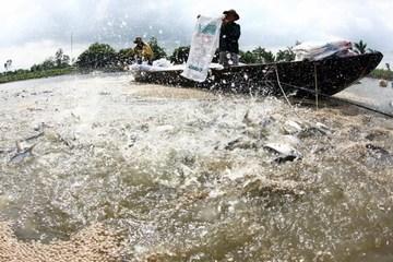 Những khuyến cáo đối với cơ sở nuôi trồng thủy sản trước mùa mưa bão