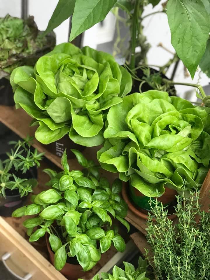 cách làm vườn,trồng cây ban công,khu vườn đẹp