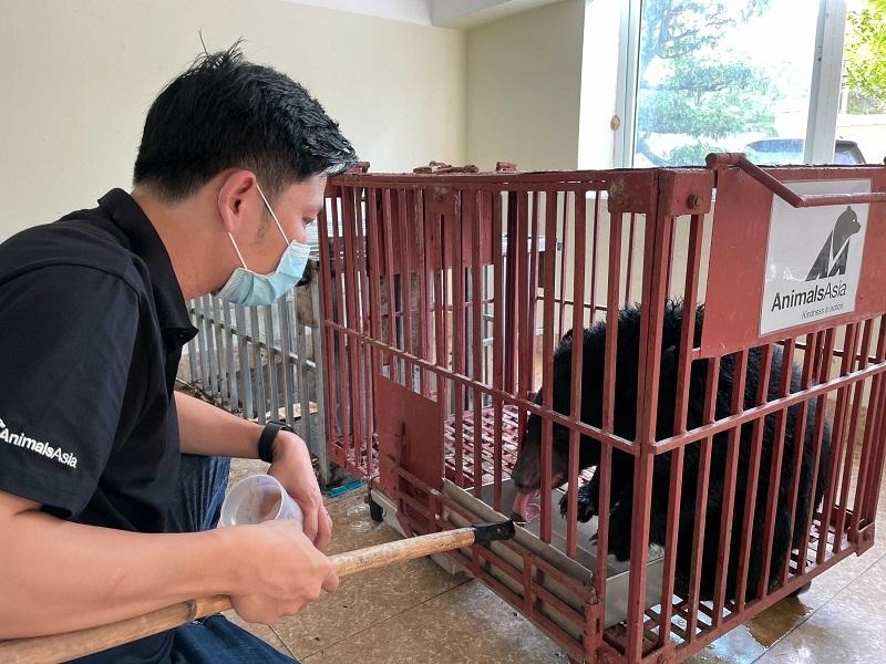 Cứu hộ thành công một cá thể gấu ngựa từ Điện Biên