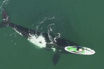 Cá voi thúc vào thuyền ngoài khơi Argentina và kết quả bất ngờ