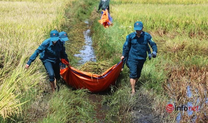 Hàng trăm hecta lúa hư hại, mọc mầm trên cánh đồng sau bão số 5
