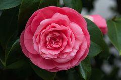 Loài hoa đẹp hiếm có chỉ tồn tại ở hai địa điểm trên thế giới