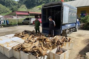 Hơn 1 tấn sản phẩm động vật không rõ nguồn gốc ở Sơn La bốc mùi suýt đưa vào thị trường tiêu thụ