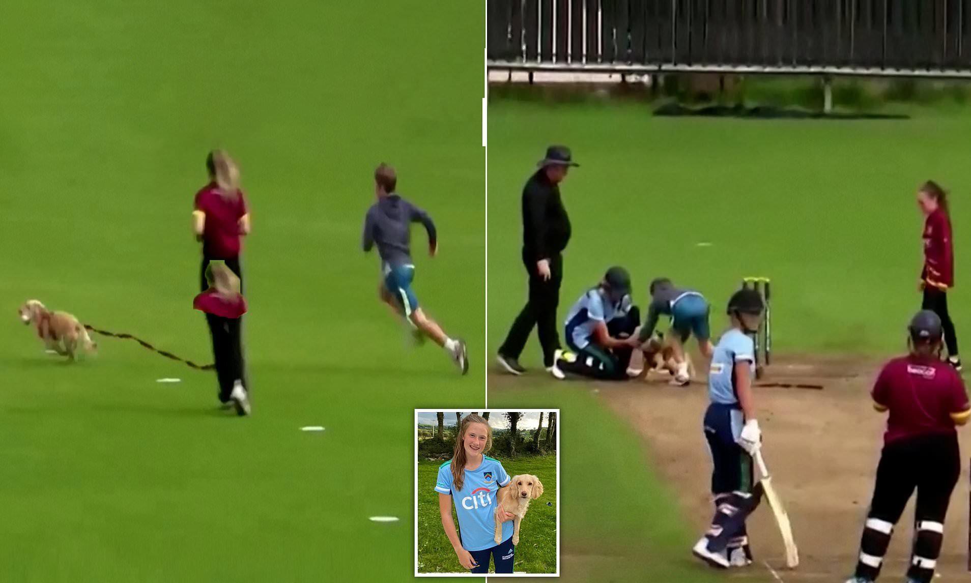 Khoảnh khắc hài hước chó chạy vào cướp bóng của người chơi giữa trận đấu