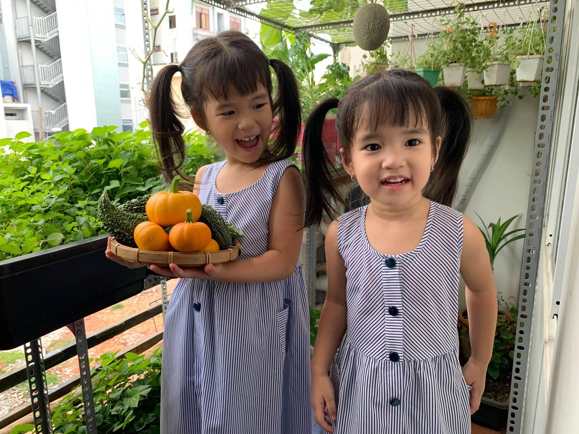 vườn rau ban công,bố đảm Sài Gòn