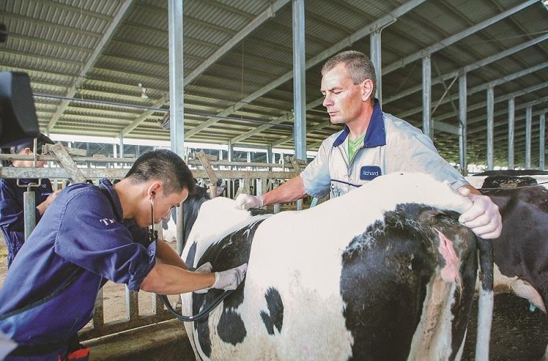 Cụm trang trại bò sữa đạt kỷ lục thế giới tại Việt Nam dưới góc nhìn của chuyên gia quốc tế