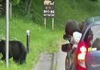 Kỷ lục số ca tử vong do bị gấu tấn công ở Nhật Bản