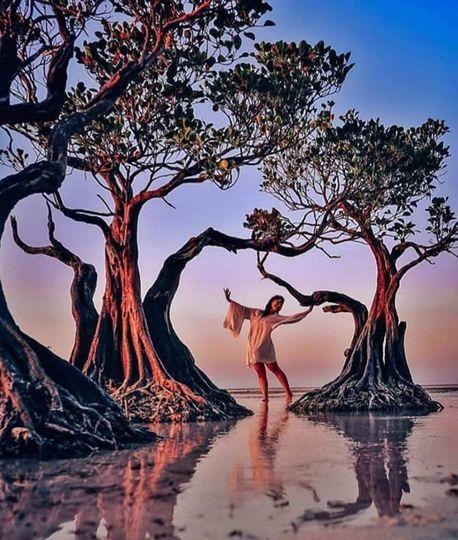 Độc đáo những cây ngập mặn 'nhảy múa' trên đảo Sumba