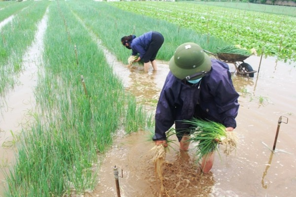 Nghệ An: Mưa lớn khiến rú Nguộc sạt lở, nhiều cầu tràn, nhà dân bị ngập nước