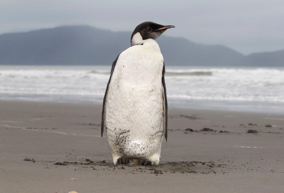trái đất,chim cánh cụt
