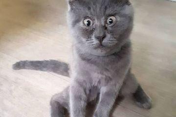 Con mèo nổi tiếng khắp mạng xã hội vì sở hữu gương mặt 'thần thái'