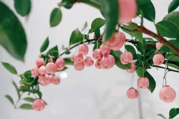Loại cành quả lạ yểu điệu như tiểu thư, 'quyến rũ' người yêu hoa nhất định phải thử