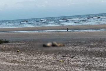 Phát hiện thi thể người trôi dạt vào bờ biển, nghi đã tử vong nhiều ngày