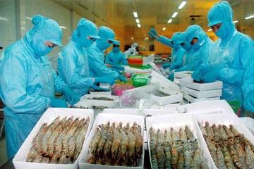 Tôm Việt Nam xuất khẩu sang Nga tăng mạnh