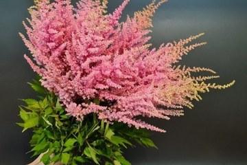 Cành hoa đẹp mong manh, tên gọi khiến ai cũng muốn cắm chơi trong nhà