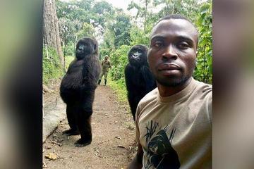 Khỉ đột làm dáng chụp ảnh nổi tiếng khắp mạng xã hội và cái kết đau lòng