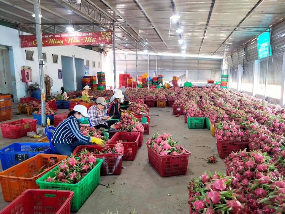 Những thách thức khi nông sản Việt được cấp 'giấy thông hành' ra nước ngoài
