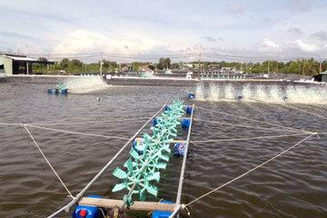 Chủ động các giải pháp phát triển nuôi trồng thủy sản trong điều kiện dịch bệnh