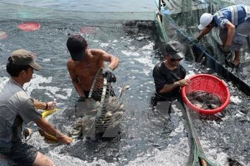 Nam Định đặt nhiều mục tiêu phát triển kinh tế biển ở 3 huyện Nghĩa Hưng, Hải Hậu, Giao Thủy