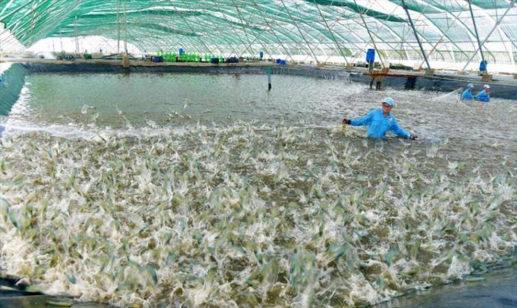 Sóc Trăng phấn đấu đến năm 2025, tổng sản lượng thủy sản đạt 417.000 tấn