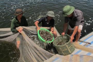 Tiền Giang phấn đấu đến năm 2025, kim ngạch xuất khẩu nông lâm thủy sản đạt 520 triệu USD