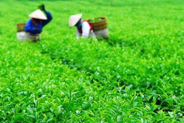 Thái Nguyên: Nhiều sản phẩm đủ điều kiện tham gia OCOP cấp tỉnh